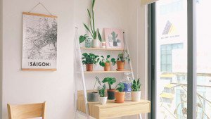 Indoor plant trend during the new normal